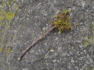 Stick and moss arrow